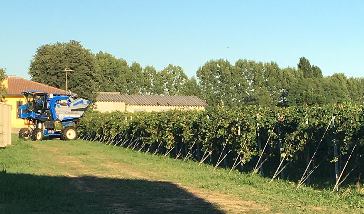 agrifarm-group-vigneto-produzione-vino-spumante-extra-dry-etichetta-treviso-veneto-02