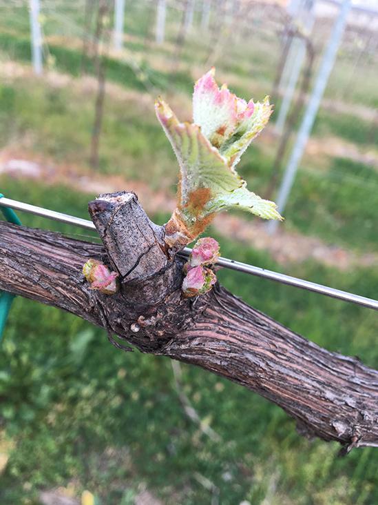 agrifarm-group-vigneto-produzione-vino-spumante-extra-dry-etichetta-treviso-veneto-10